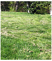 Как сделать газон густой 79